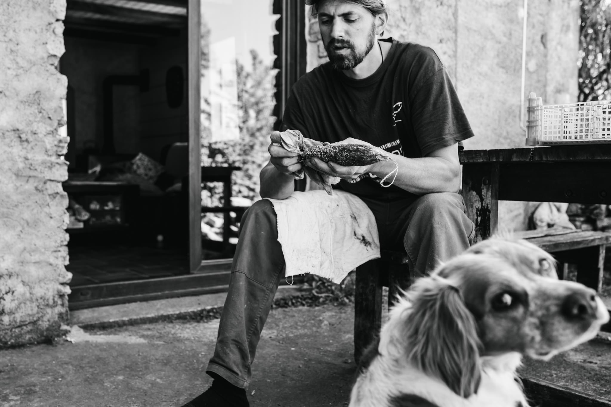 un chien surveille les saucissons de son maître